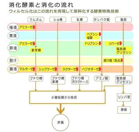 消化吸収の流れ.jpg